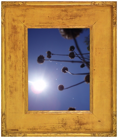 Millbrook flora series